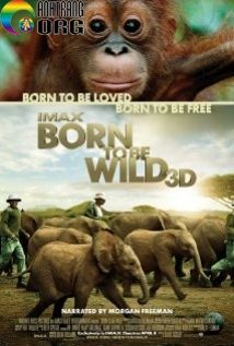 Sinh-Ra-Trong-Hoang-DC3A3-Born-to-Be-Wild-2011