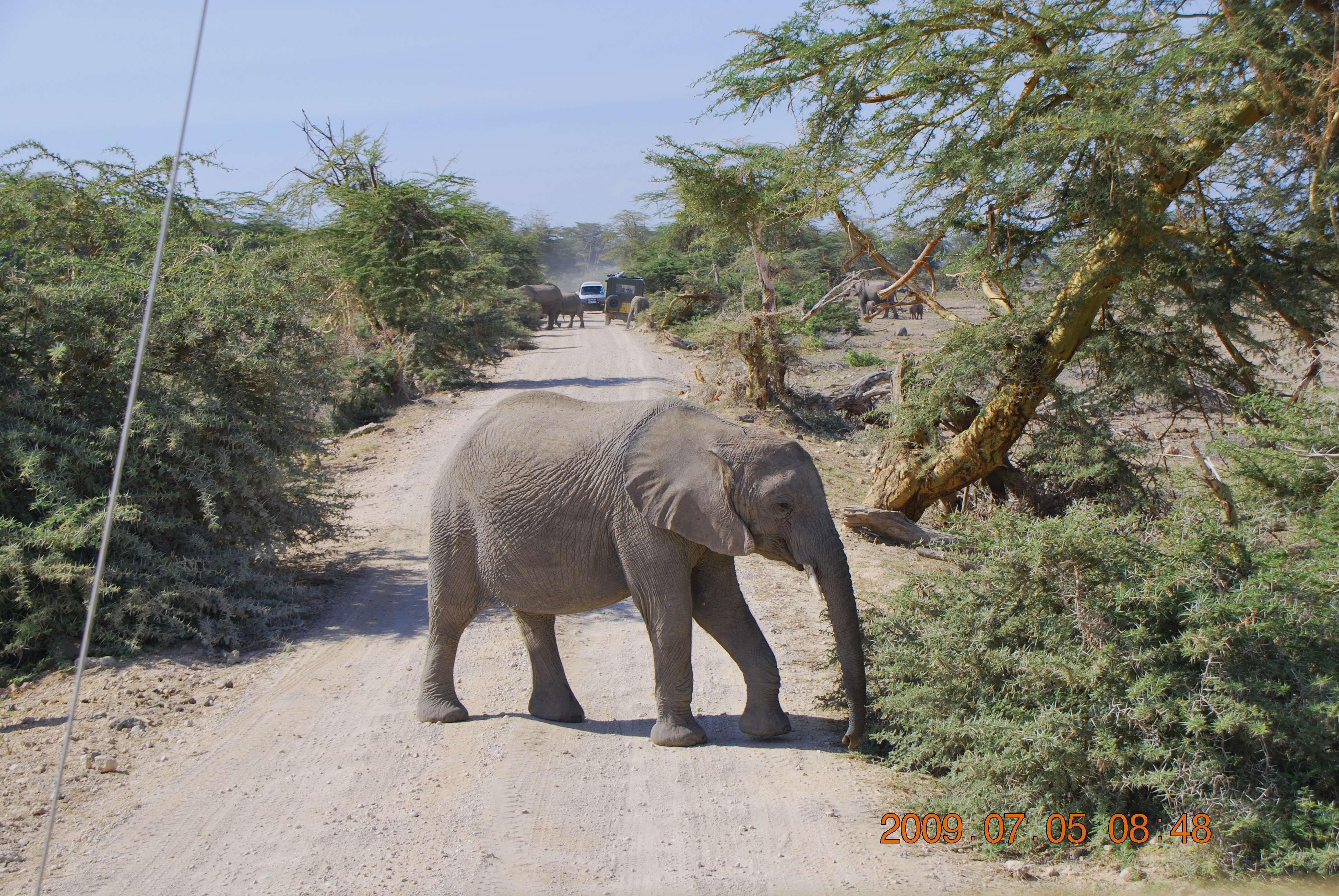 Ol Tukai, lodge en Amboseli